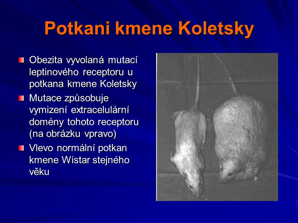 Potkani kmene Koletsky