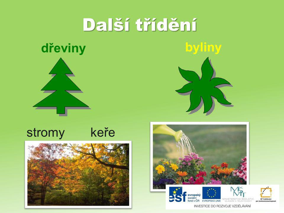 Další třídění byliny dřeviny stromy keře