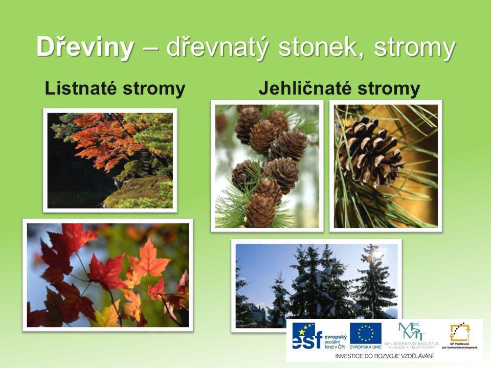 Dřeviny – dřevnatý stonek, stromy