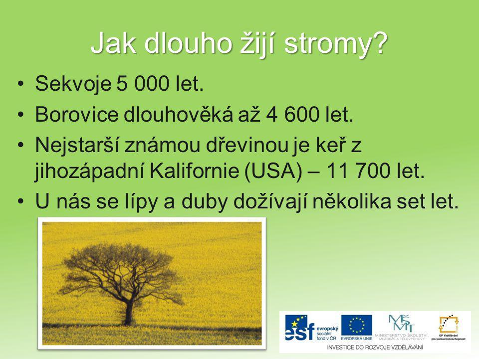 Jak dlouho žijí stromy Sekvoje 5 000 let.