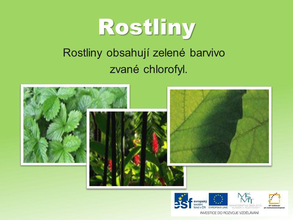Rostliny obsahují zelené barvivo