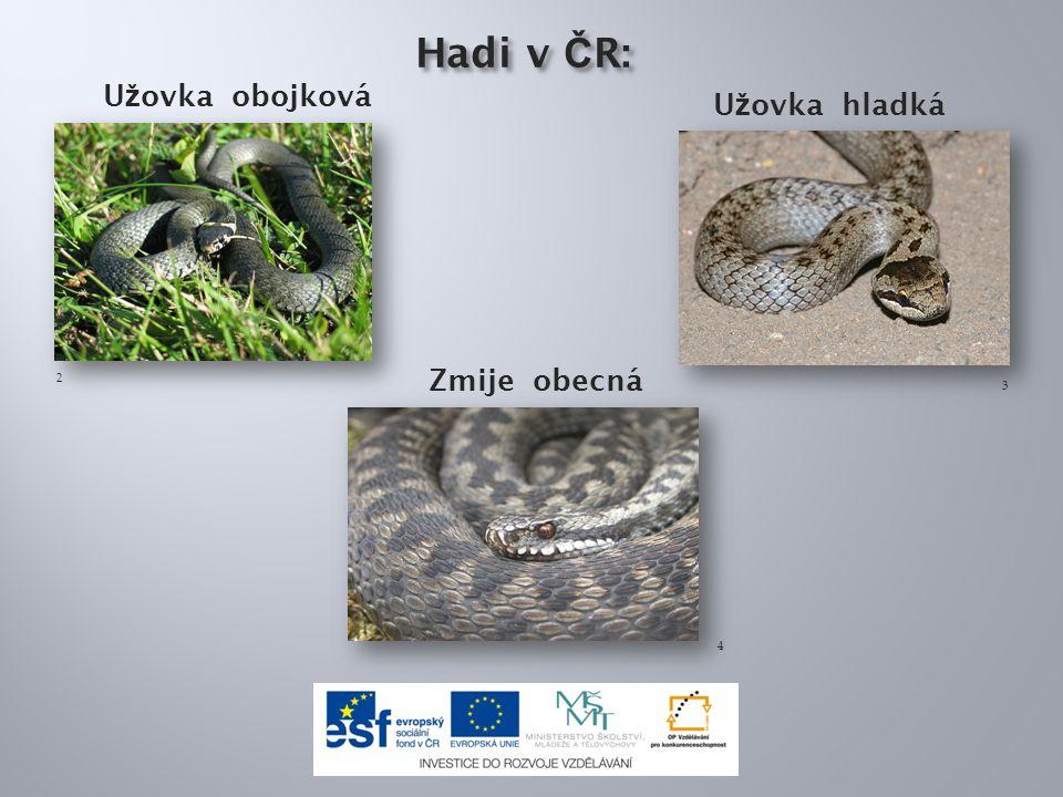 Hadi v ČR: Užovka obojková Užovka hladká Zmije obecná 2 3 4