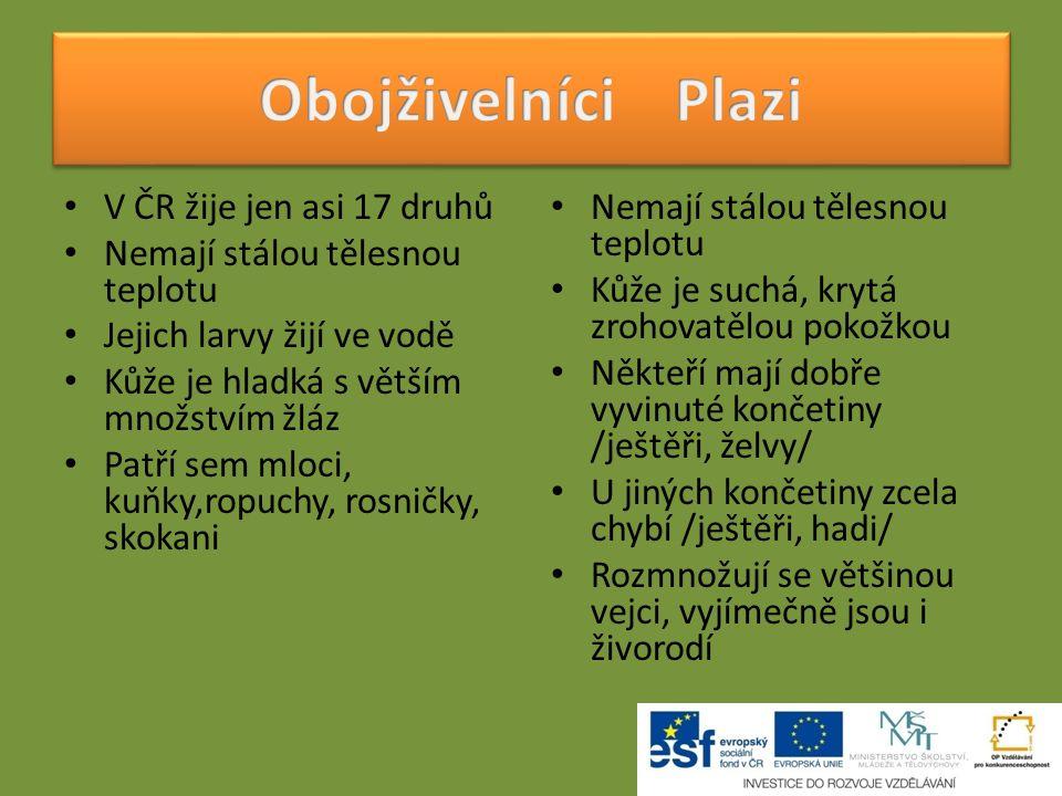 Obojživelníci Plazi V ČR žije jen asi 17 druhů