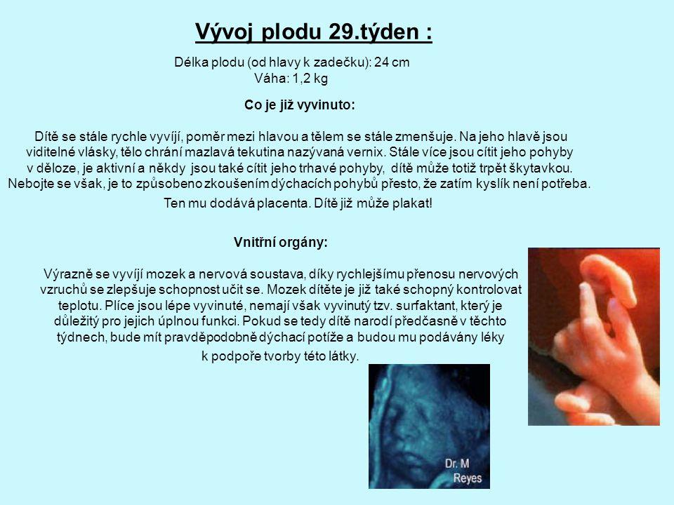Vývoj plodu 29.týden : Délka plodu (od hlavy k zadečku): 24 cm