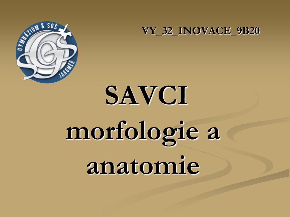 VY_32_INOVACE_9B20 SAVCI morfologie a anatomie