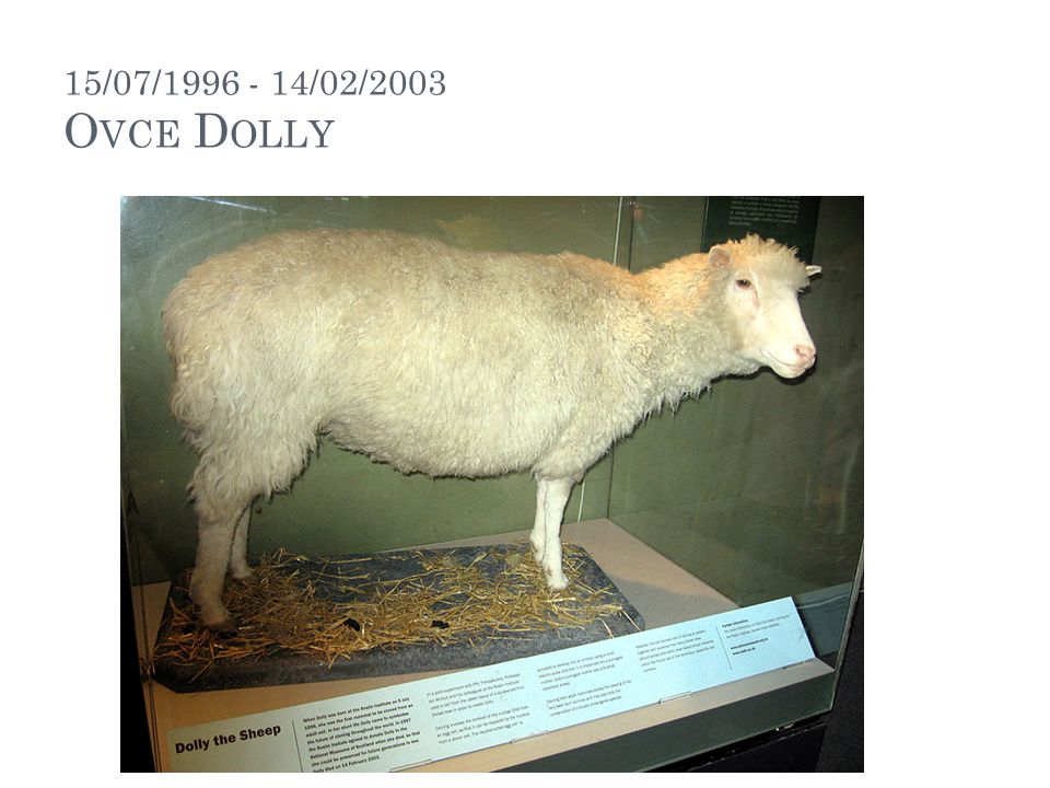 15/07/1996 - 14/02/2003 Ovce Dolly