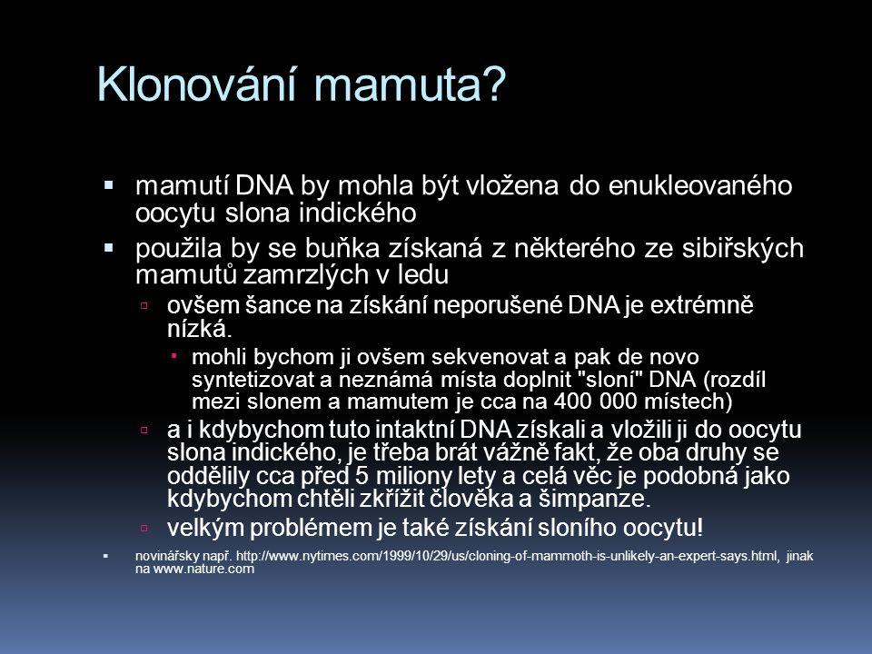 Klonování mamuta mamutí DNA by mohla být vložena do enukleovaného oocytu slona indického.