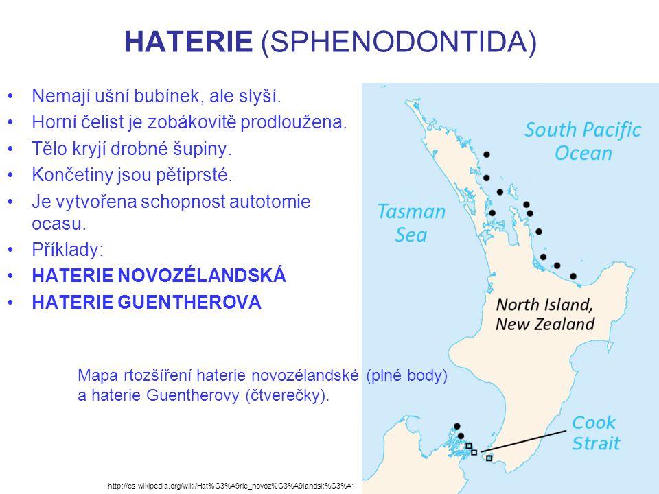 HATERIE (SPHENODONTIDA)