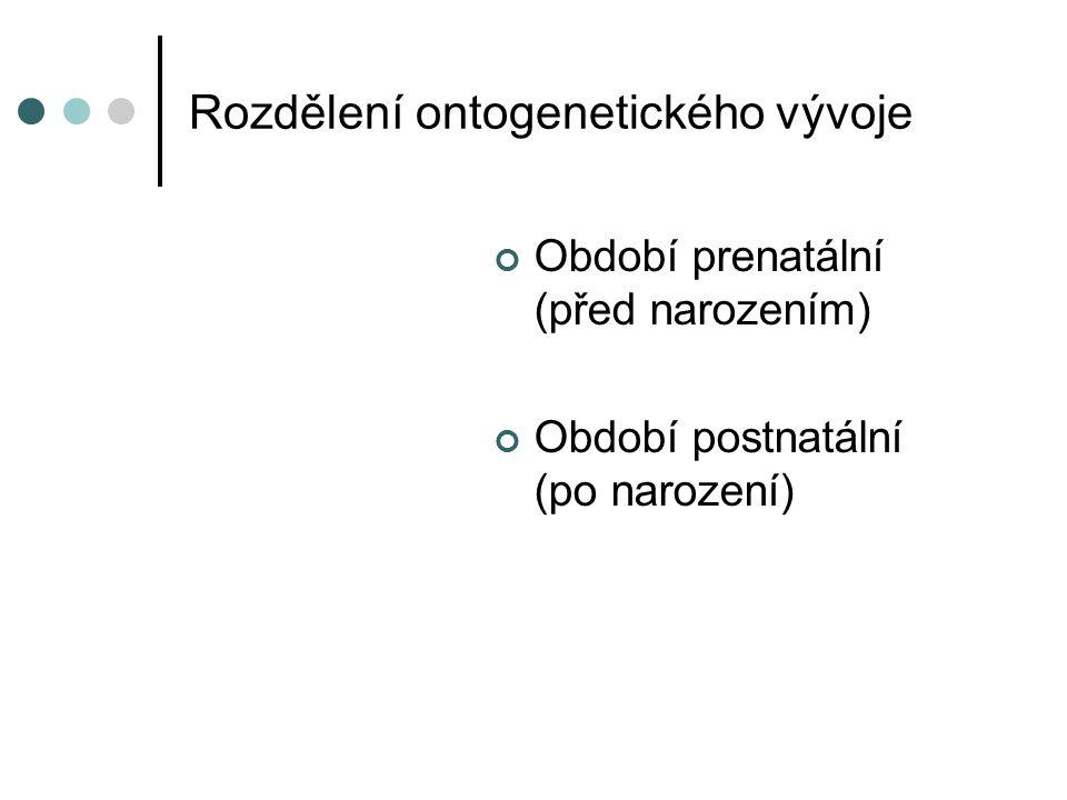 Rozdělení ontogenetického vývoje
