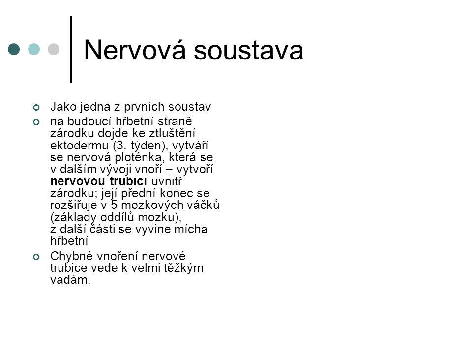 Nervová soustava Jako jedna z prvních soustav