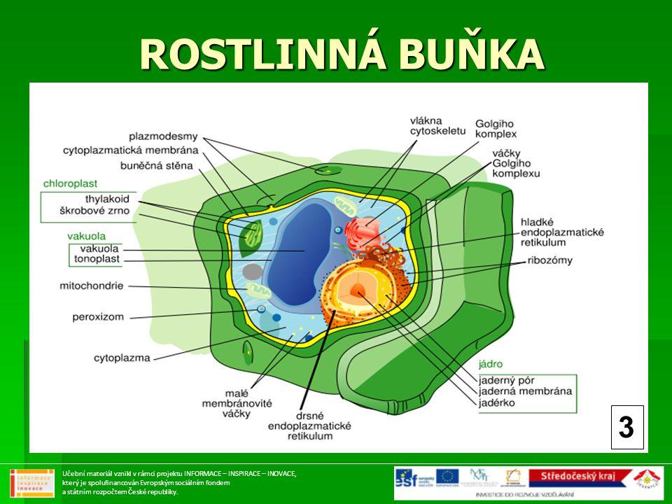 ROSTLINNÁ BUŇKA 3.