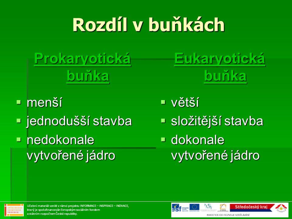 Rozdíl v buňkách Prokaryotická buňka Eukaryotická buňka menší