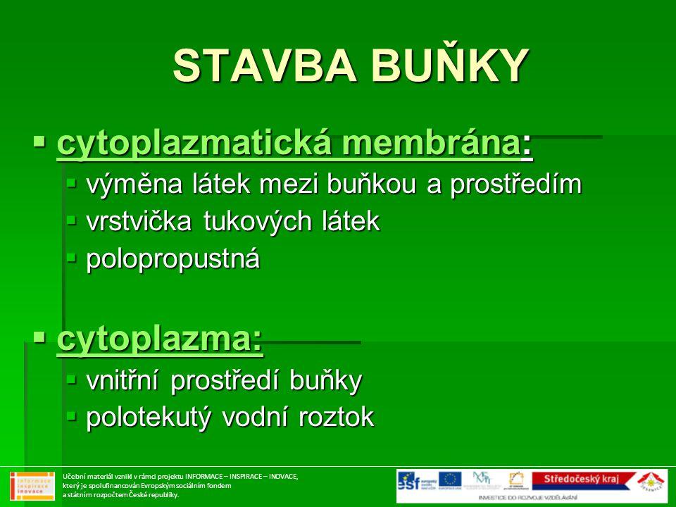 STAVBA BUŇKY cytoplazmatická membrána: cytoplazma: