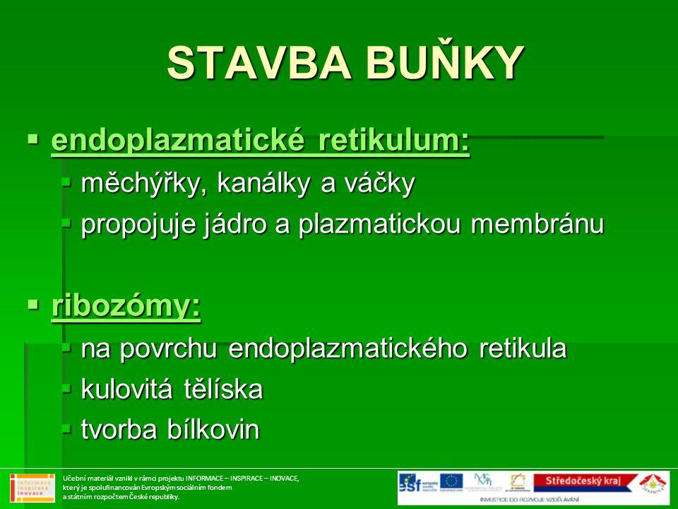 STAVBA BUŇKY endoplazmatické retikulum: ribozómy: