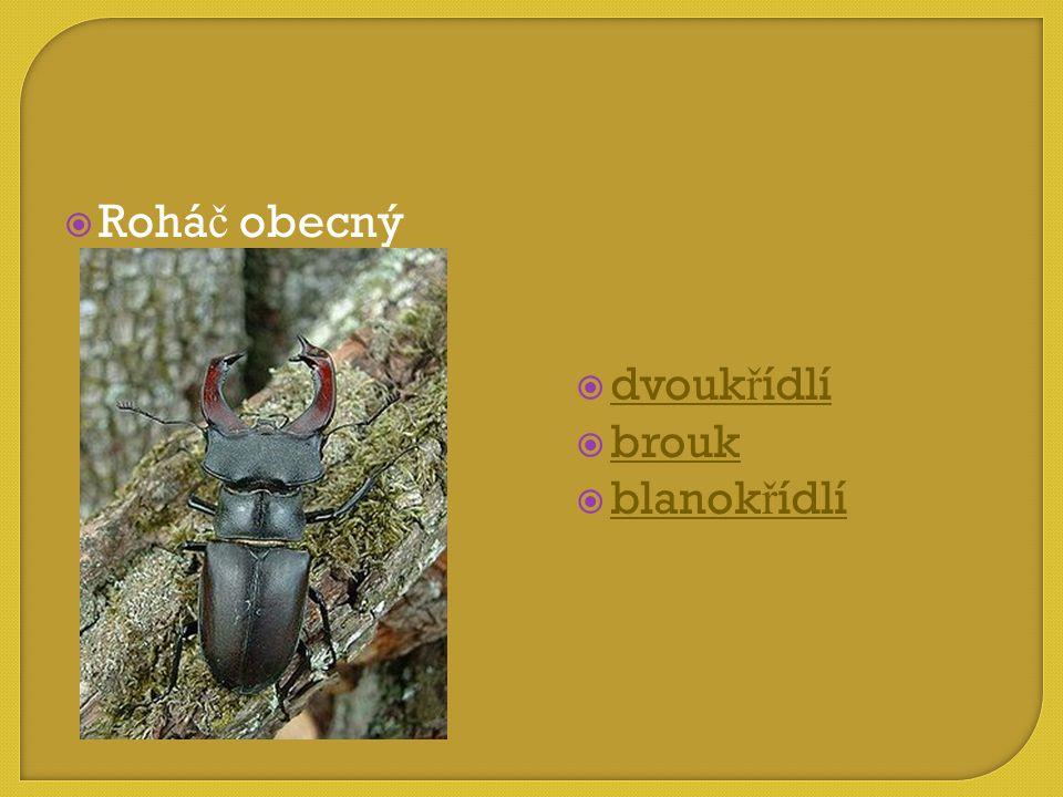 Roháč obecný dvoukřídlí brouk blanokřídlí
