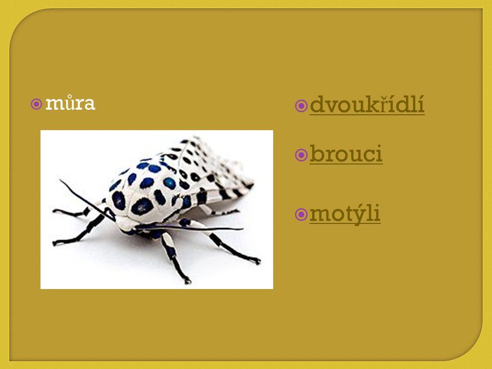 můra dvoukřídlí brouci motýli
