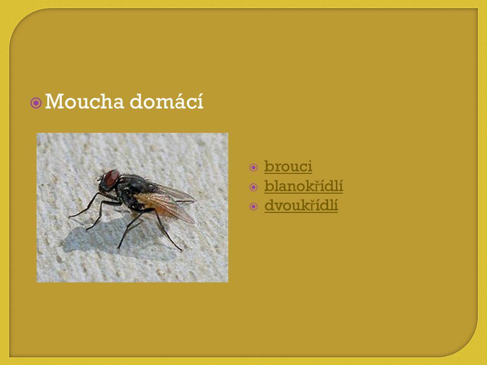 Moucha domácí brouci blanokřídlí dvoukřídlí