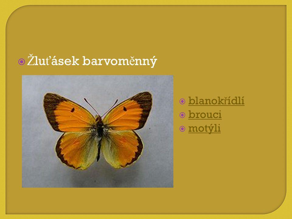 Žluťásek barvoměnný blanokřídlí brouci motýli