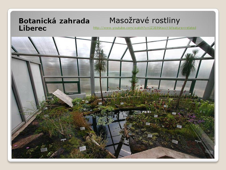 Masožravé rostliny Botanická zahrada Liberec