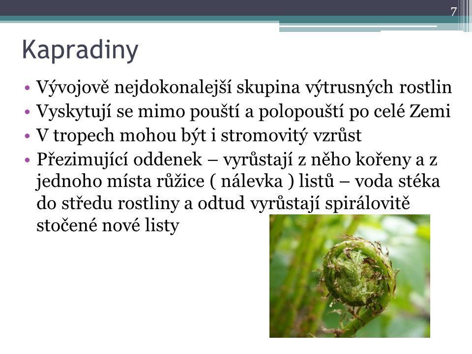 Kapradiny Vývojově nejdokonalejší skupina výtrusných rostlin