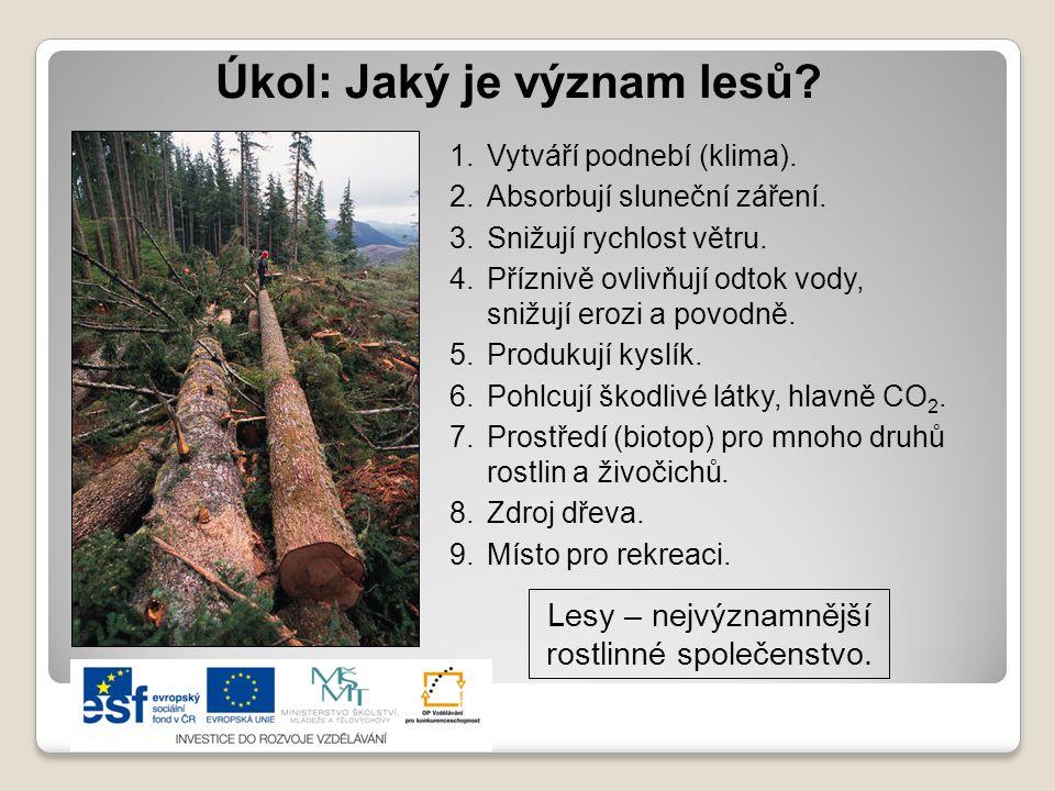 Úkol: Jaký je význam lesů