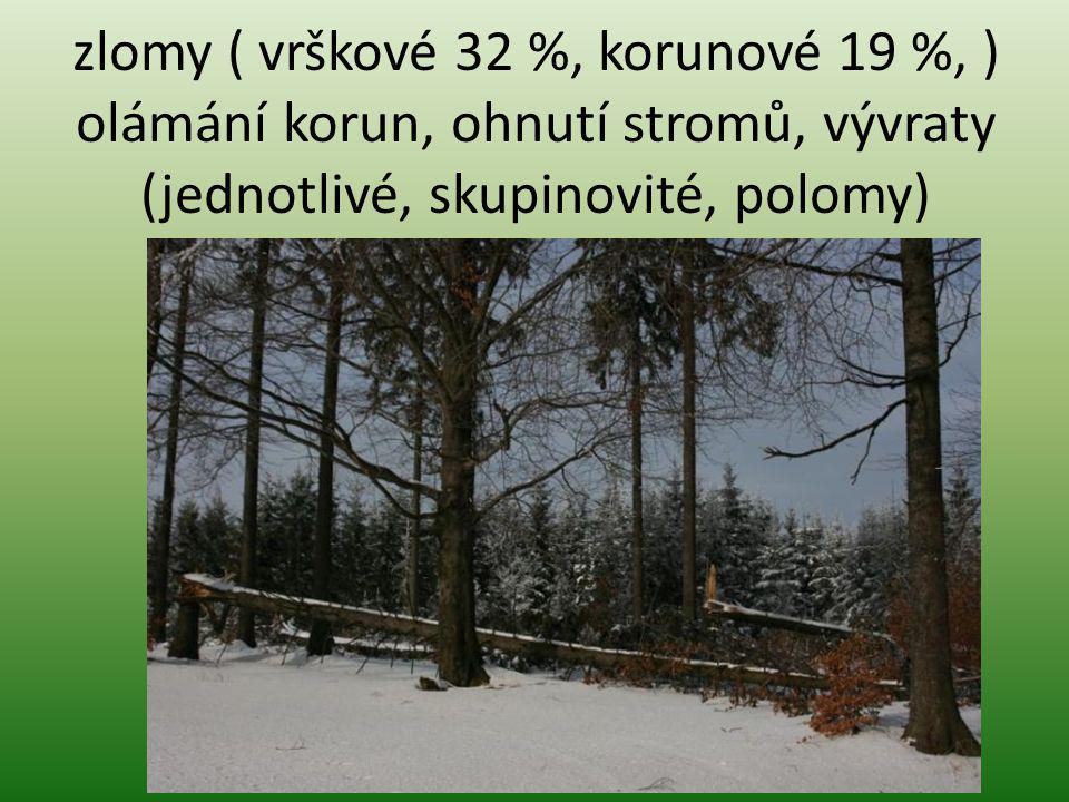 zlomy ( vrškové 32 %, korunové 19 %, ) olámání korun, ohnutí stromů, vývraty (jednotlivé, skupinovité, polomy)