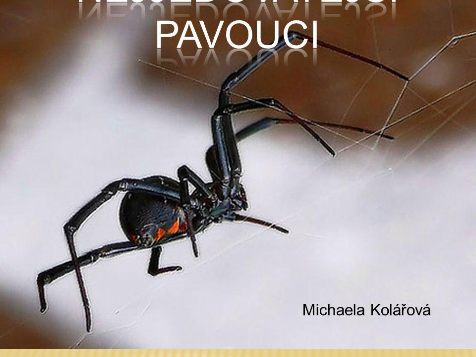 Nejjedovatější pavouci