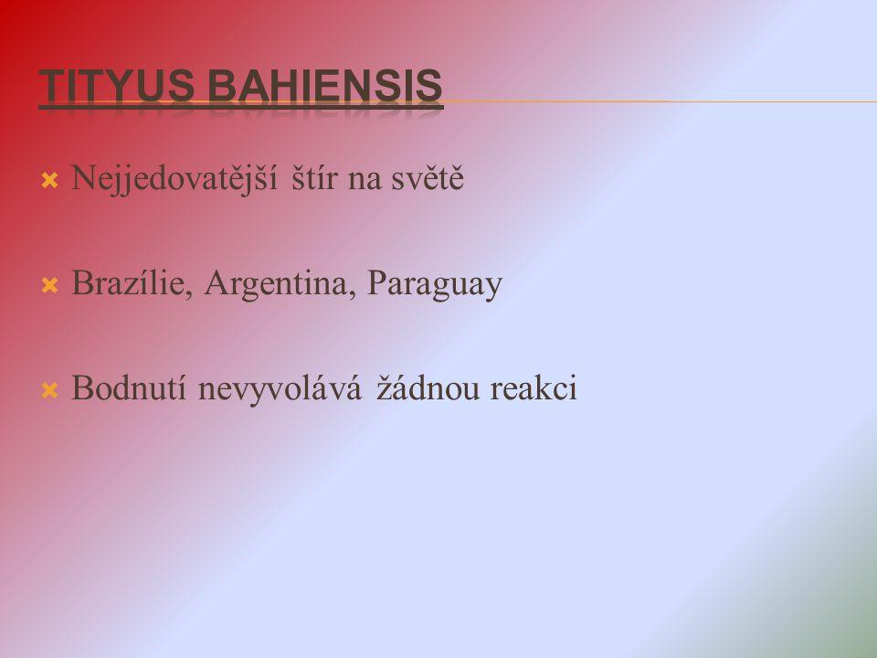 Tityus bahiensis Nejjedovatější štír na světě