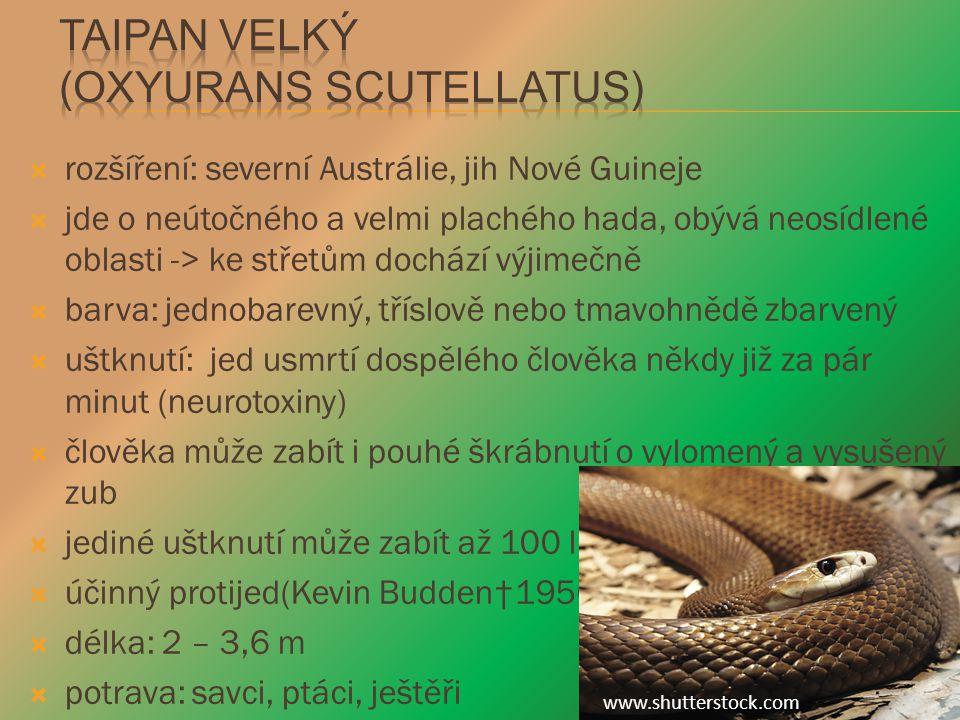 Taipan velký (Oxyurans scutellatus)