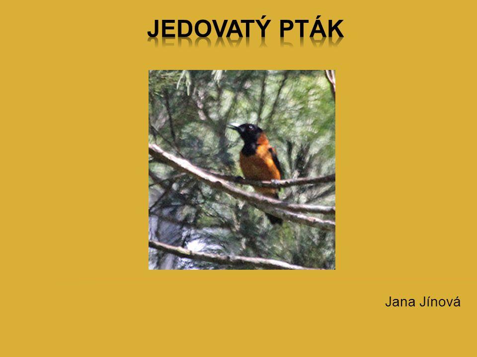 Jedovatý pták Jana Jínová