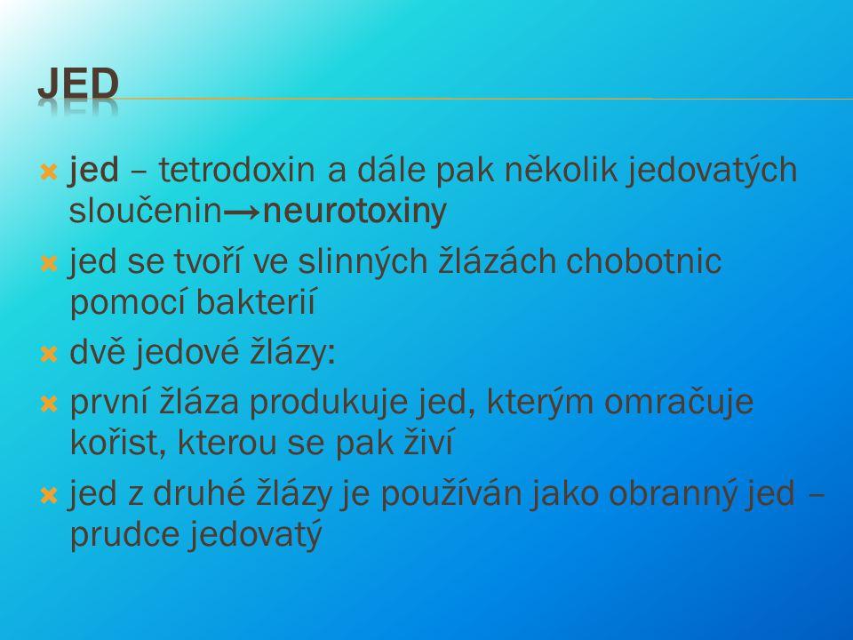 Jed jed – tetrodoxin a dále pak několik jedovatých sloučenin→neurotoxiny. jed se tvoří ve slinných žlázách chobotnic pomocí bakterií.