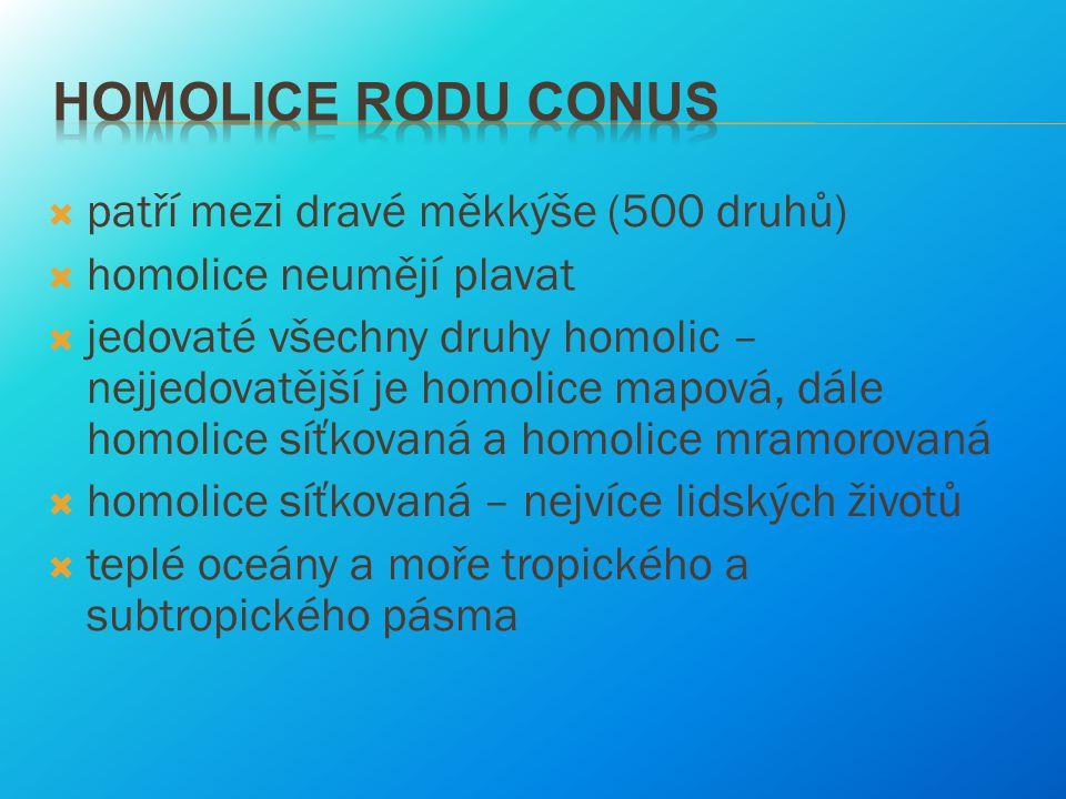 Homolice rodu Conus patří mezi dravé měkkýše (500 druhů)