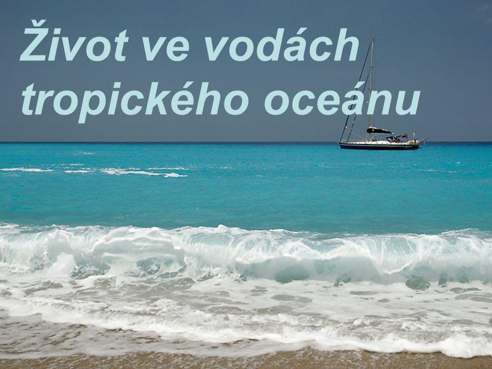 Život ve vodách tropického oceánu