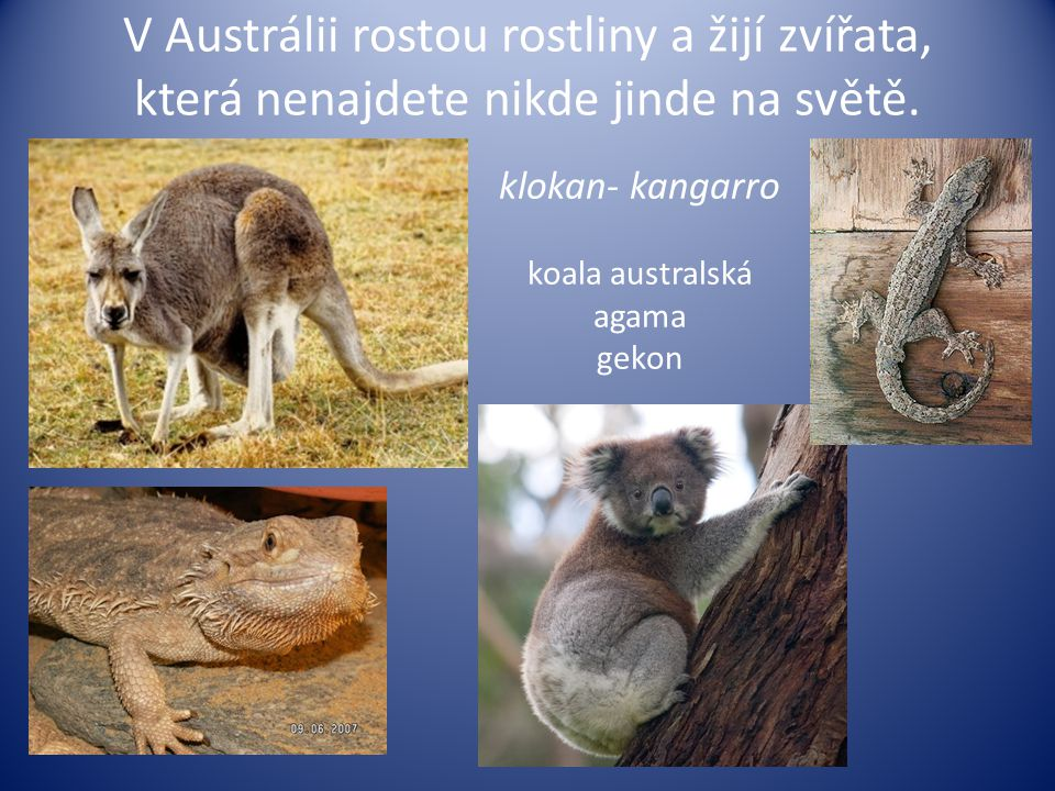 V Austrálii rostou rostliny a žijí zvířata, která nenajdete nikde jinde na světě.