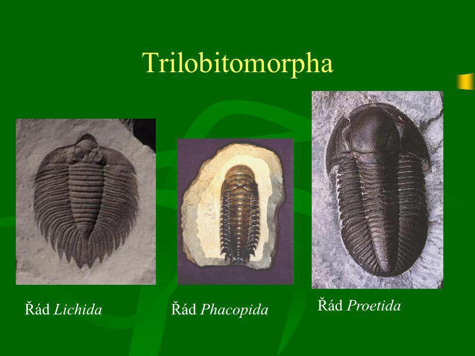 Trilobitomorpha Řád Proetida Řád Lichida Řád Phacopida