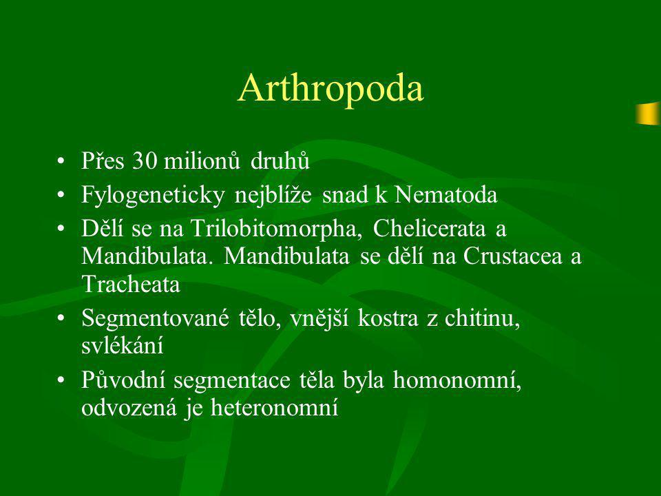 Arthropoda Přes 30 milionů druhů