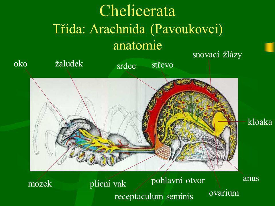 Chelicerata Třída: Arachnida (Pavoukovci) anatomie