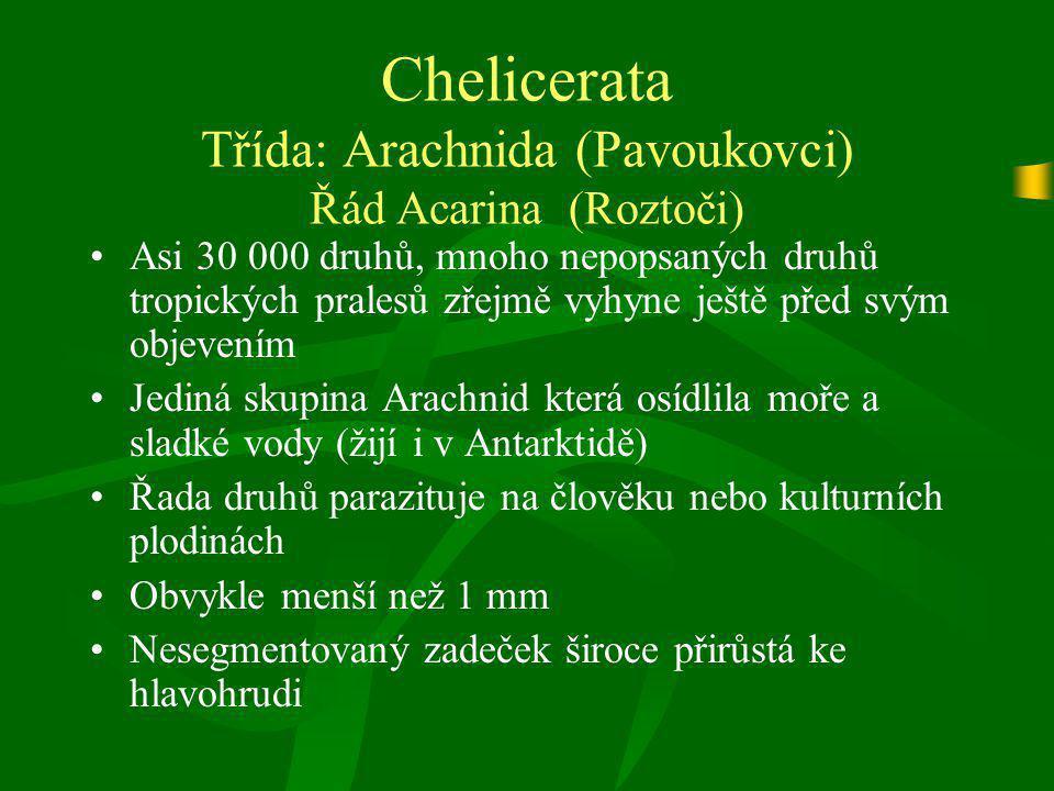 Chelicerata Třída: Arachnida (Pavoukovci) Řád Acarina (Roztoči)