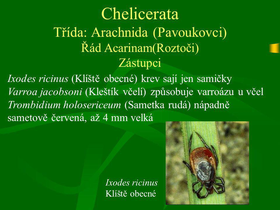 Chelicerata Třída: Arachnida (Pavoukovci) Řád Acarinam(Roztoči) Zástupci