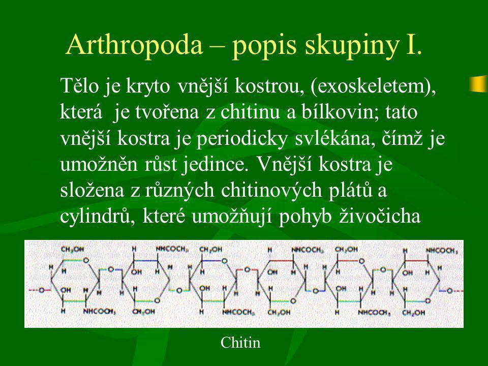 Arthropoda – popis skupiny I.