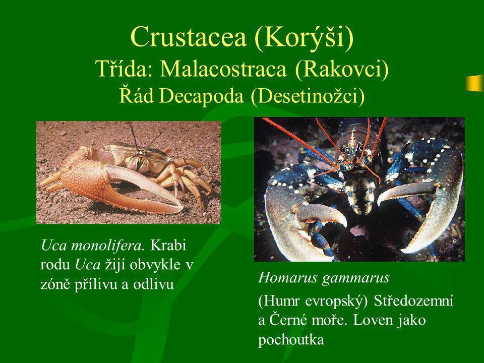 Crustacea (Korýši) Třída: Malacostraca (Rakovci) Řád Decapoda (Desetinožci)