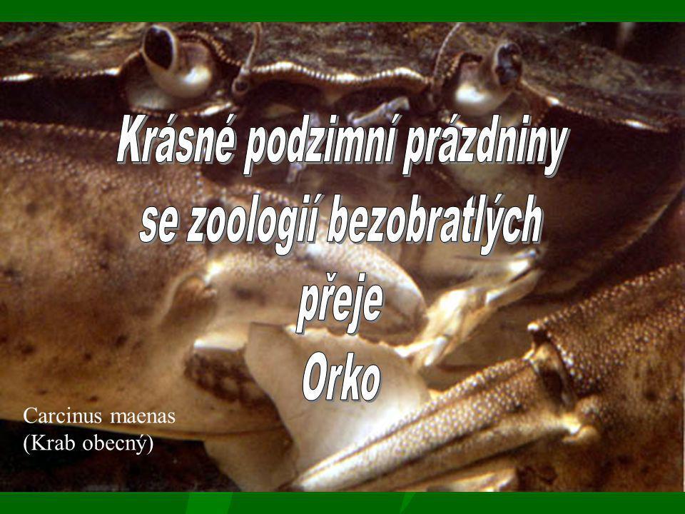 Krásné podzimní prázdniny se zoologií bezobratlých přeje Orko