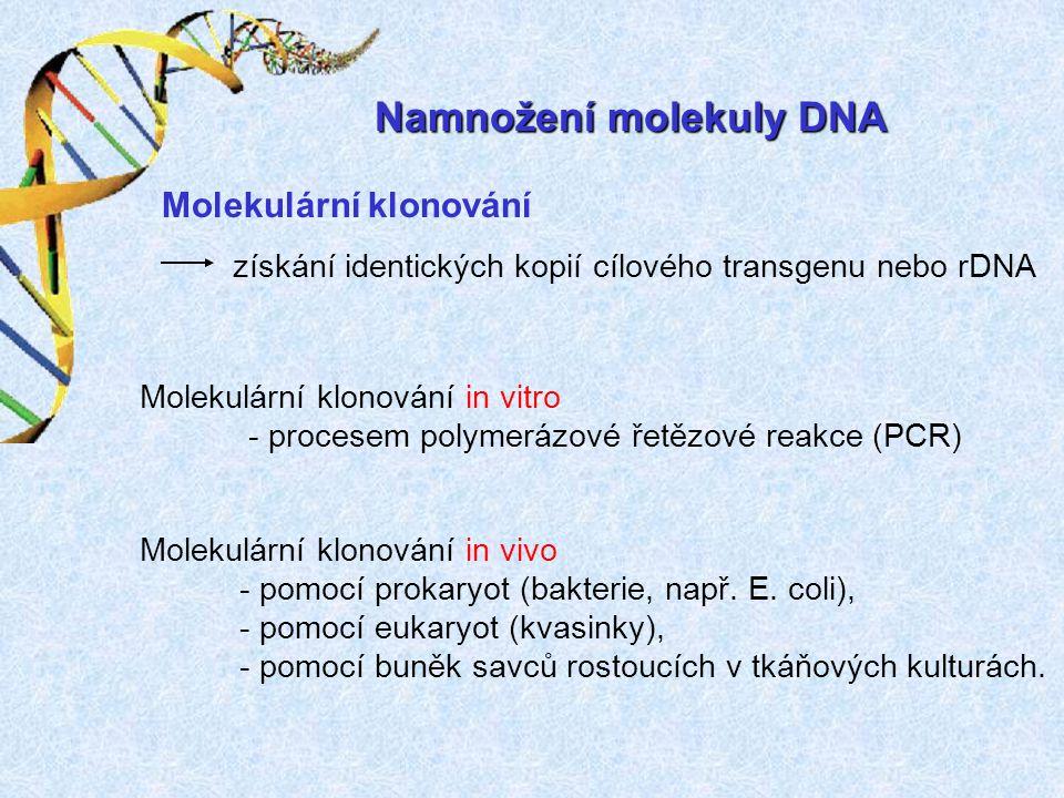 Namnožení molekuly DNA