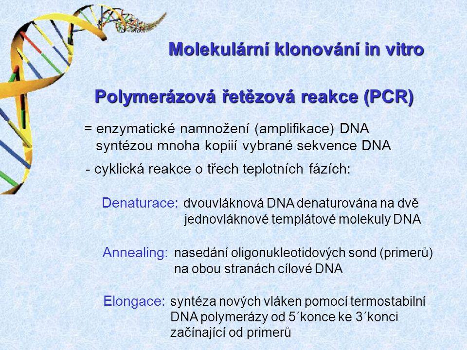 Molekulární klonování in vitro