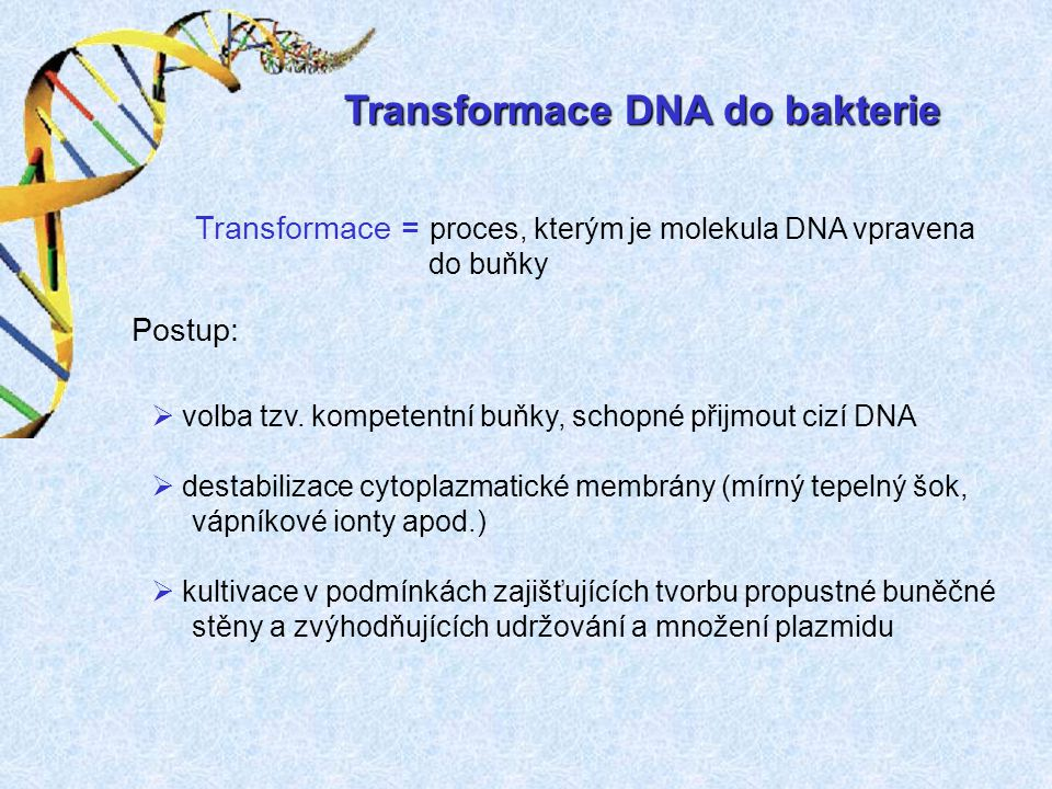 Transformace DNA do bakterie