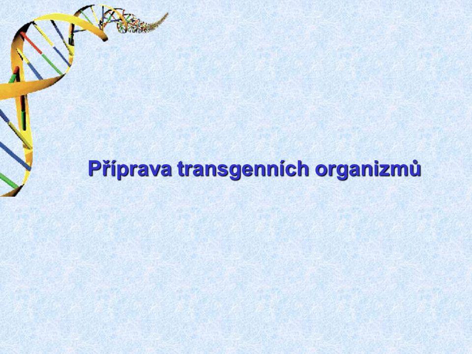 Příprava transgenních organizmů