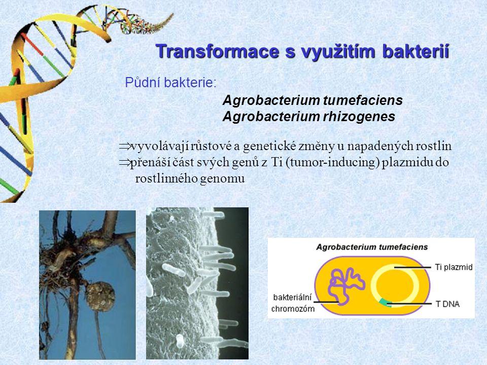 Transformace s využitím bakterií