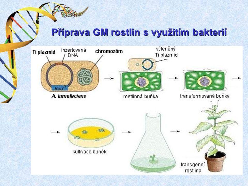 Příprava GM rostlin s využitím bakterií