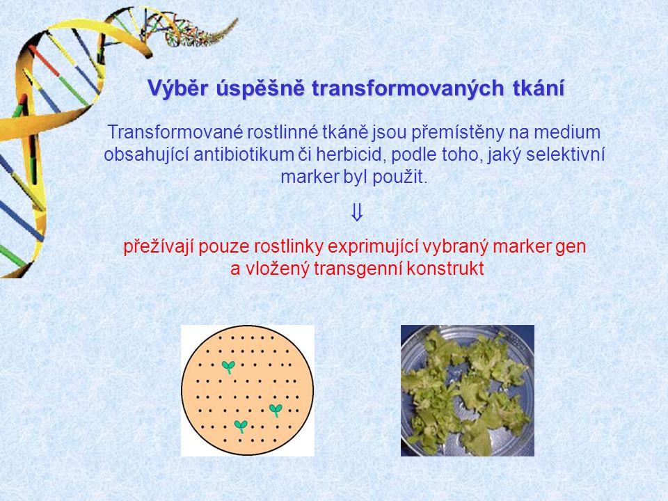 Výběr úspěšně transformovaných tkání