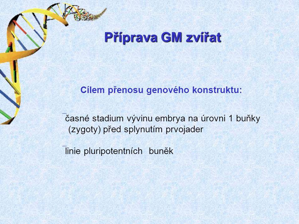 Příprava GM zvířat Cílem přenosu genového konstruktu: